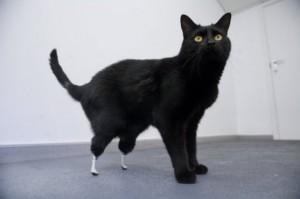Harry Hilders - Bionische kat